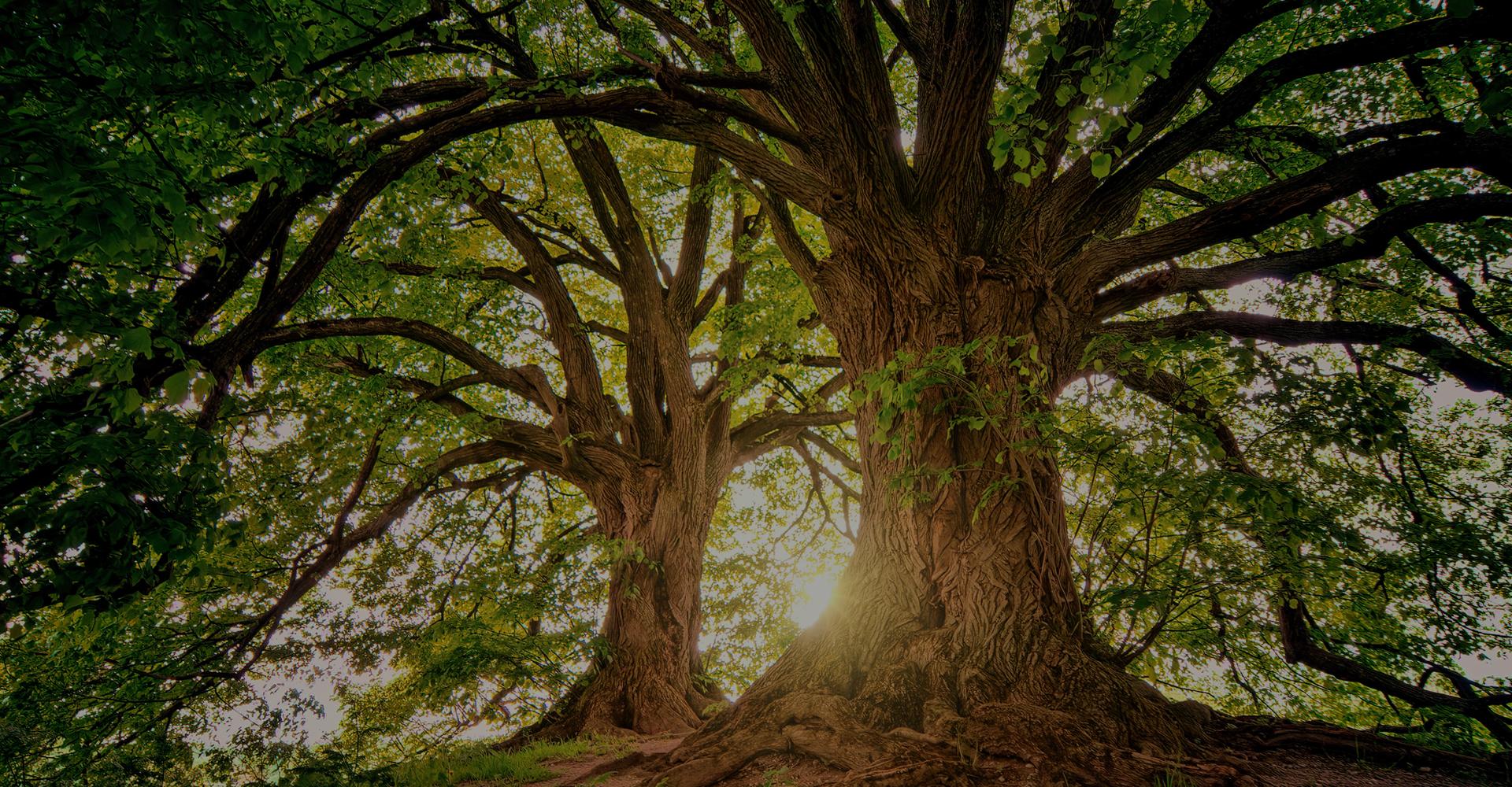 Klima- Baumhainkonzepte photosynthese Baum