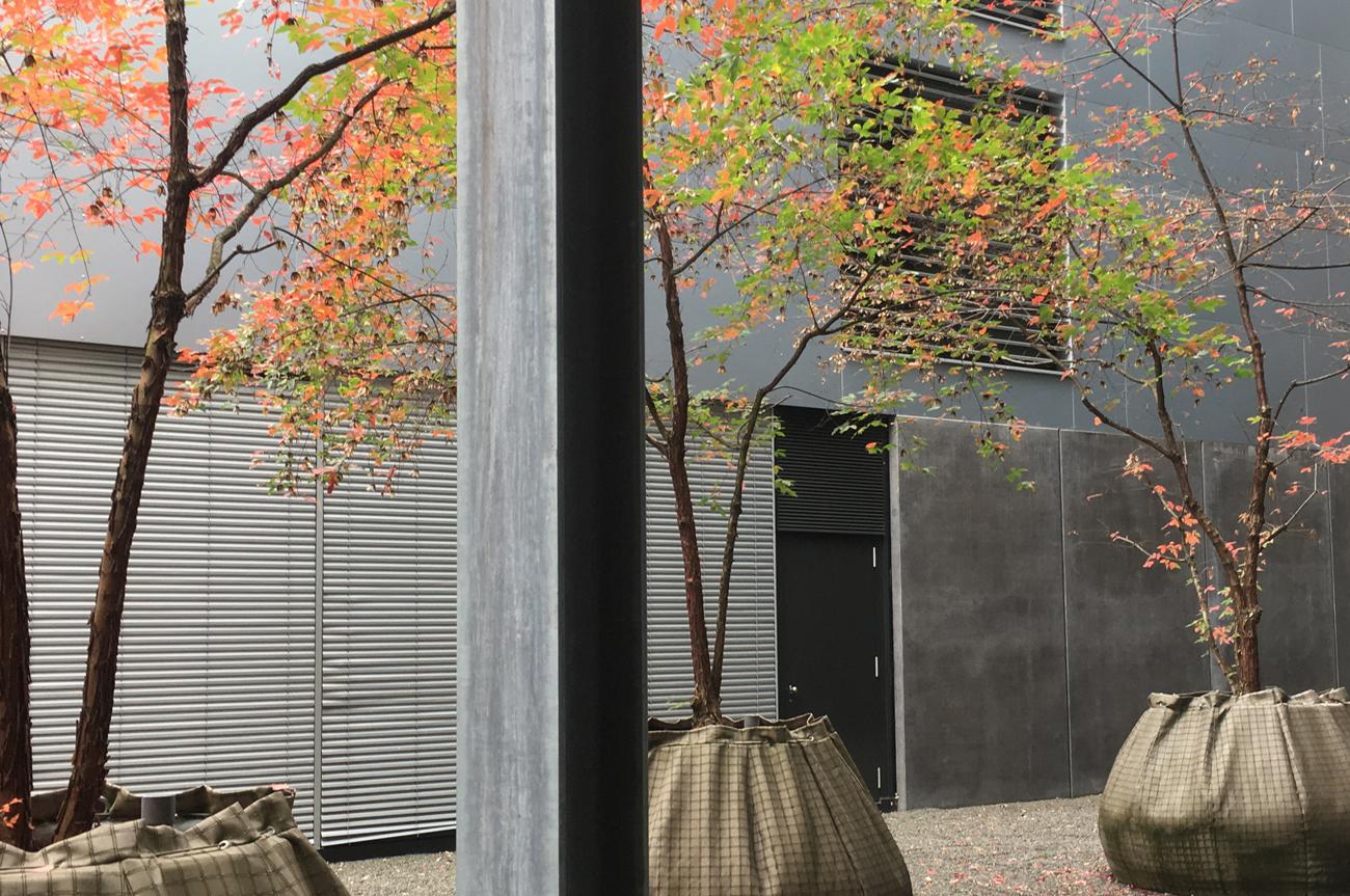 Klima- und Baumhainkonzepte Büroexkursion Baum