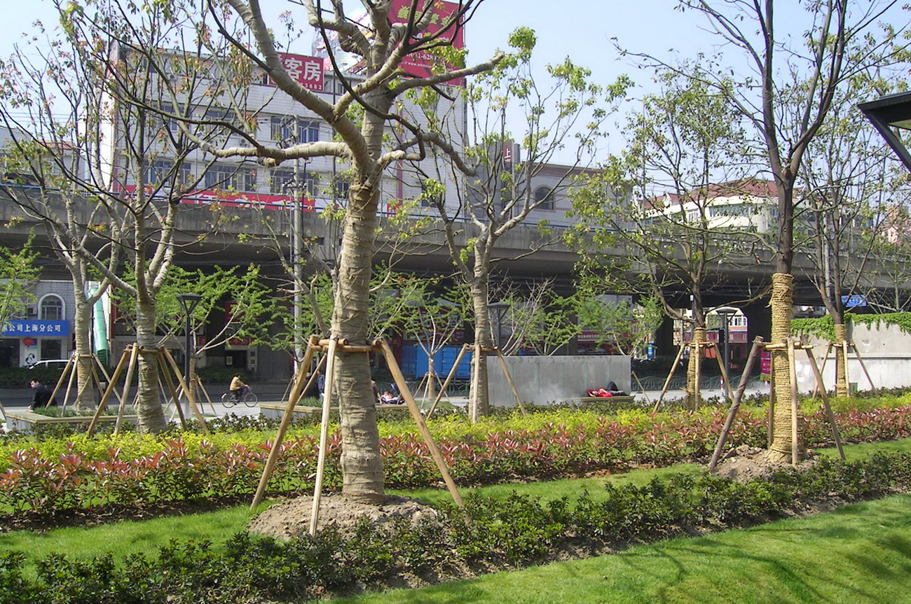 M8 Plaza in Shanghai Baumhain Projekte
